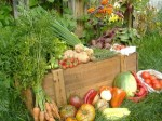 fruits_and_vegetables_volunteering_at_organic_farms-300x225